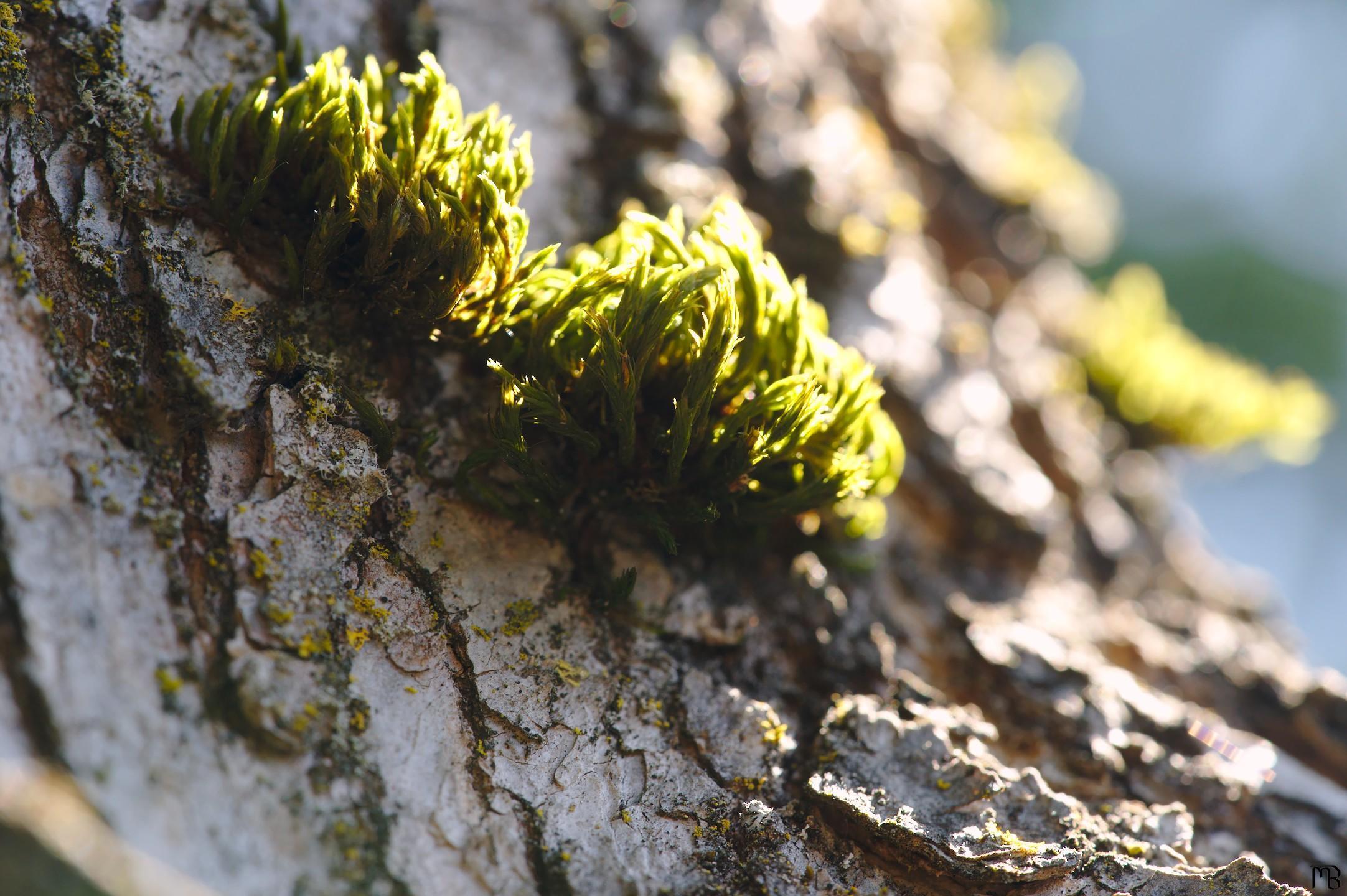 Light caressing green moss