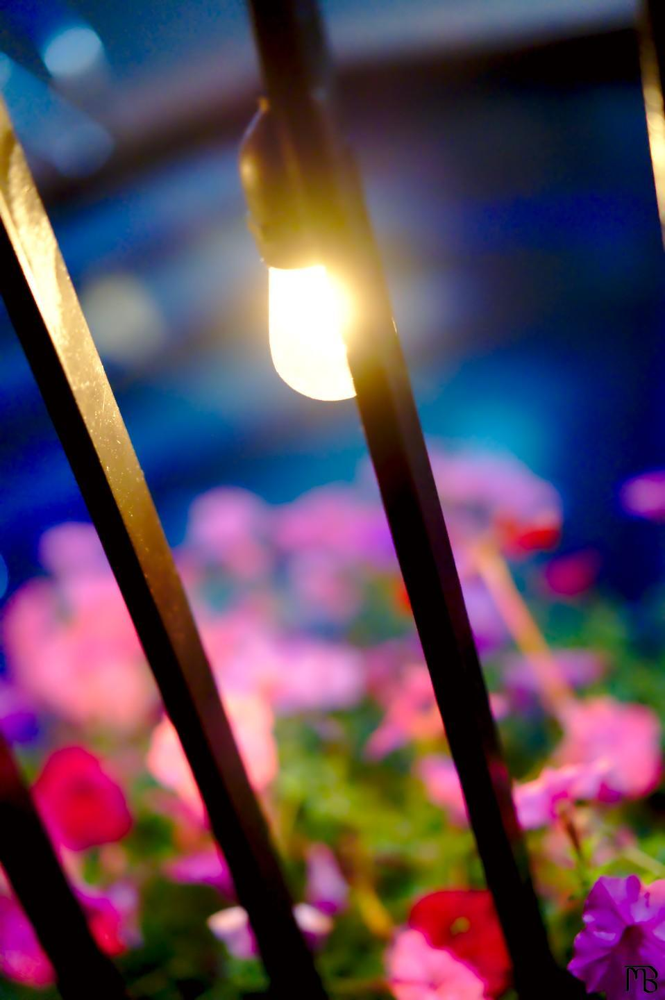 Arty light bulb by pink flowers and pool