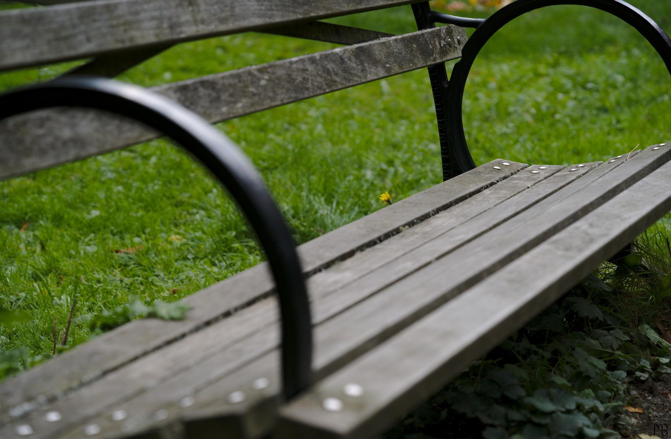 Yellow flower near bench