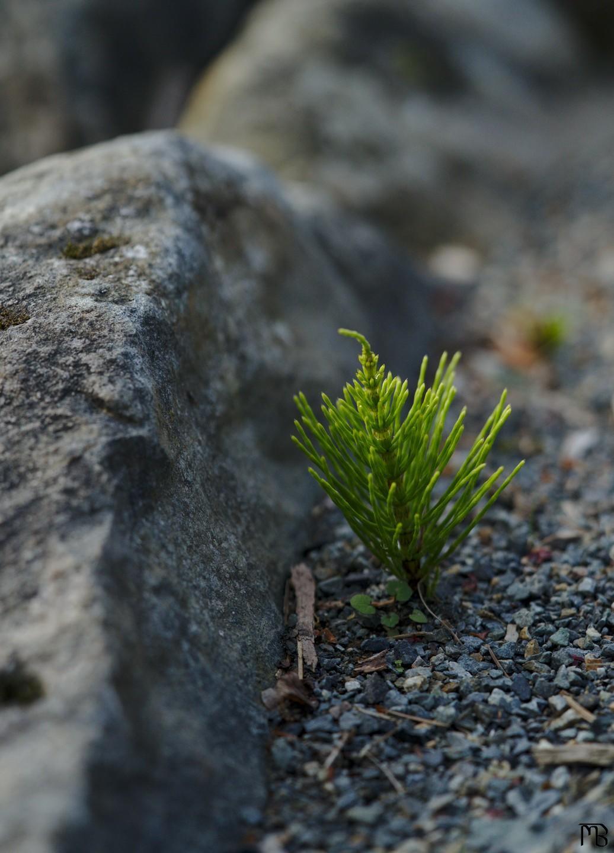 Tiny tree sprouting near rocks