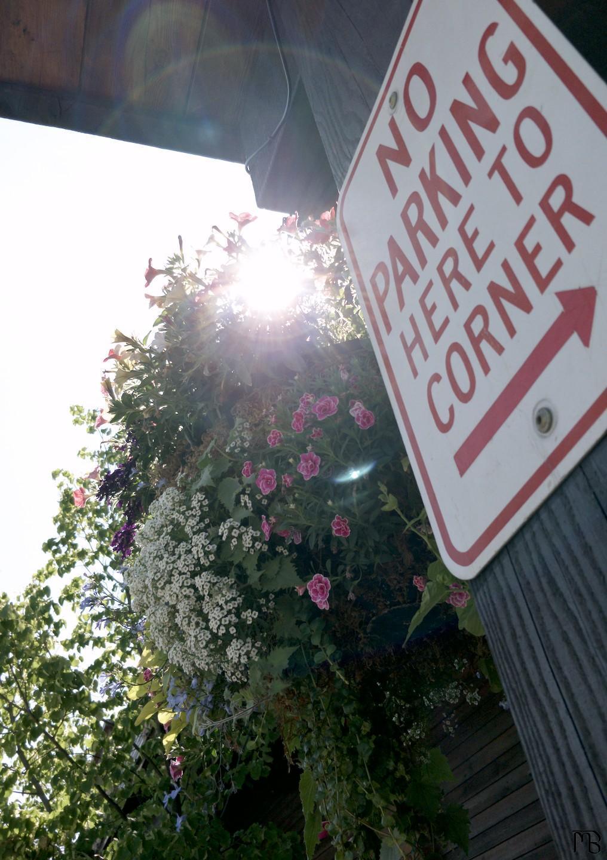 No parking sign with flower basket