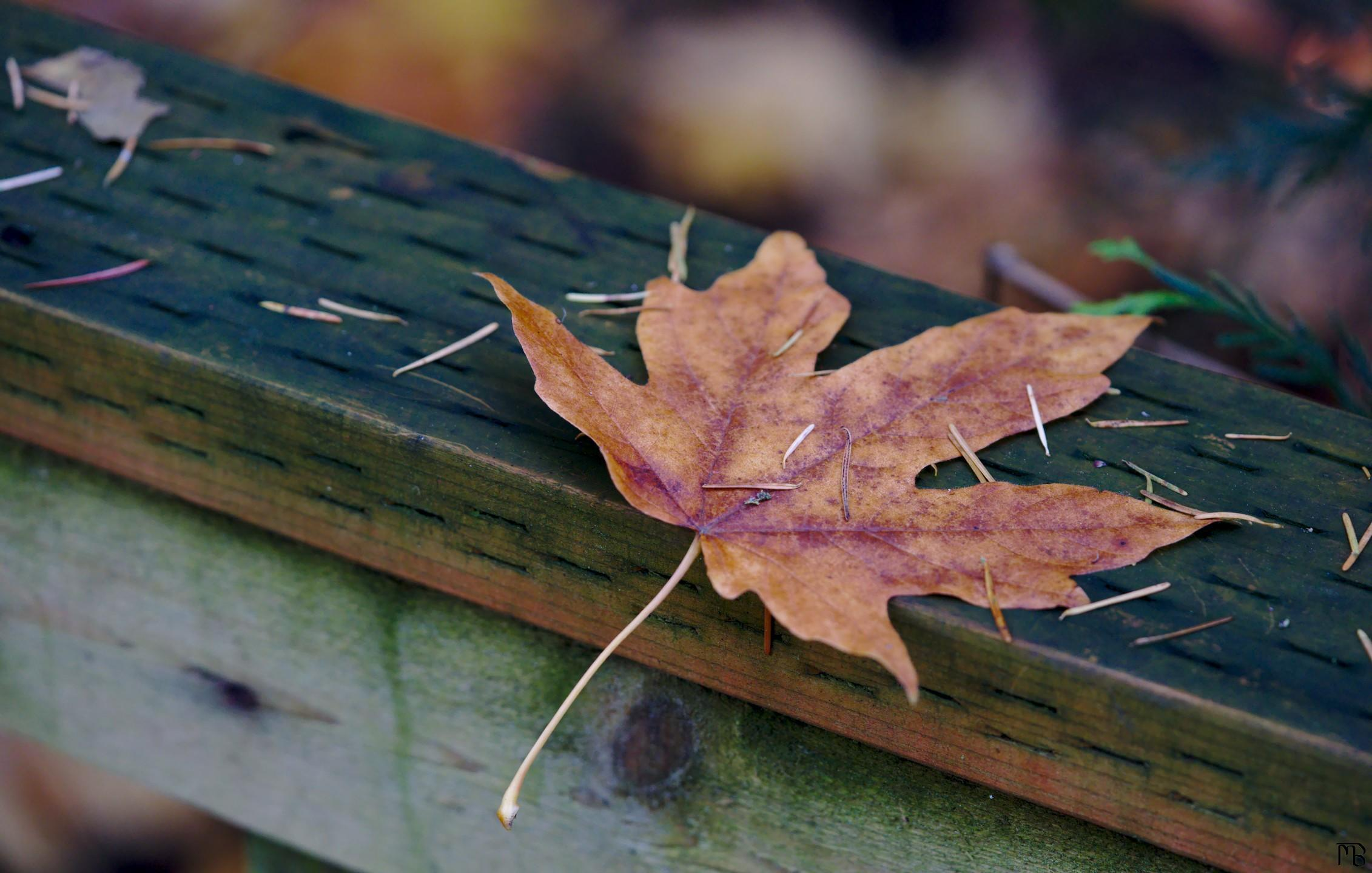 Brown leaf on wooden rail