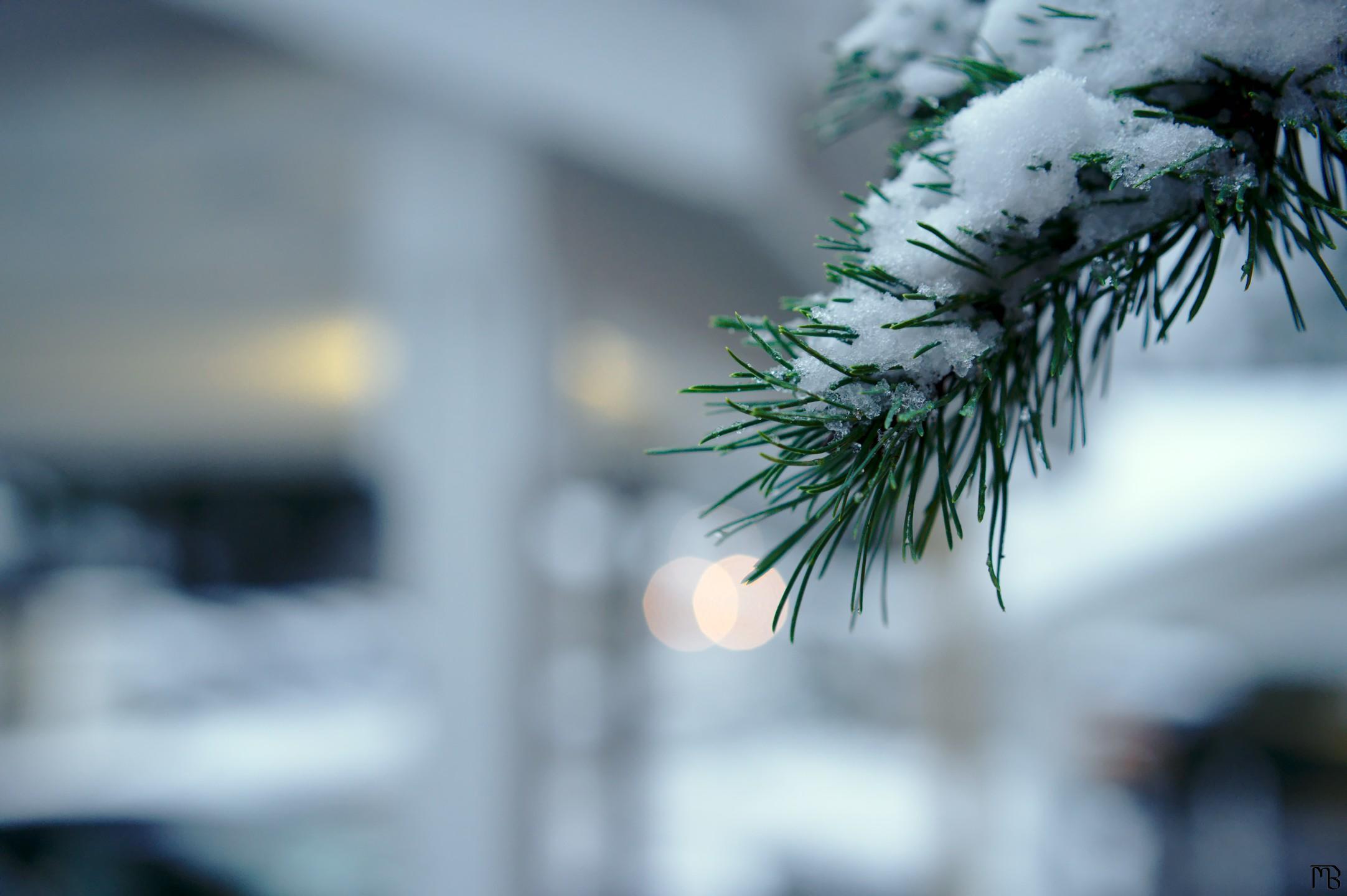 Snow on branch near garage