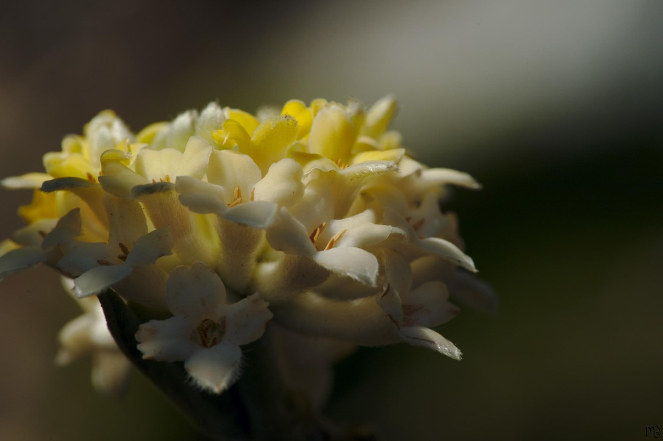 Yellow and white flower in sun