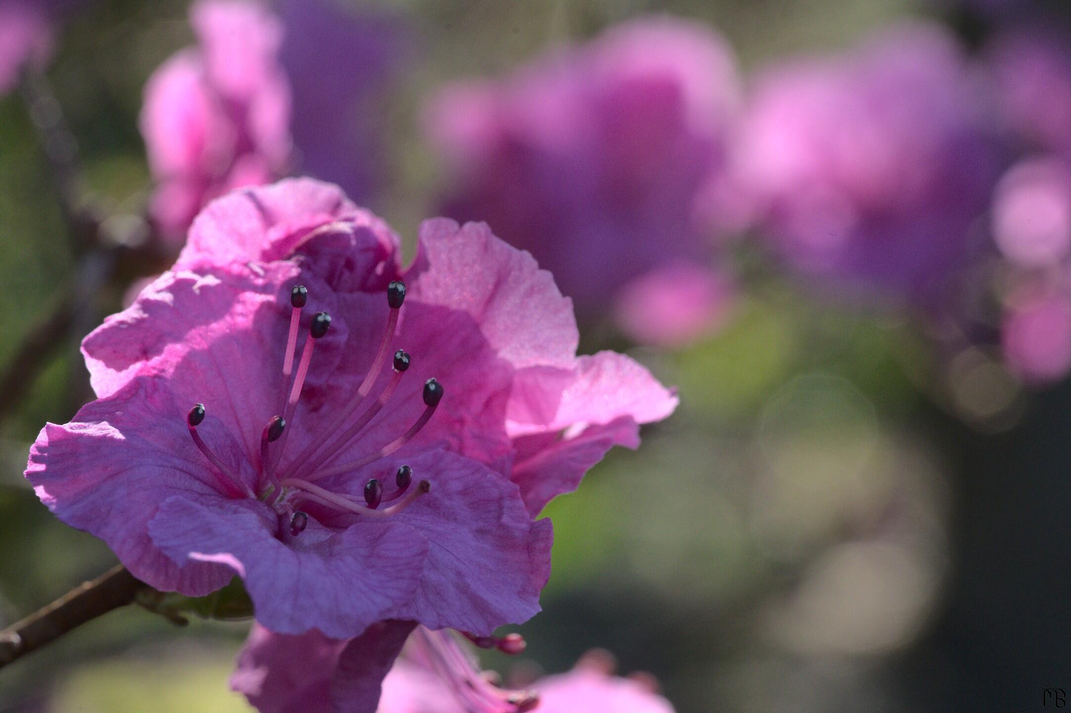 Pink flower on branch