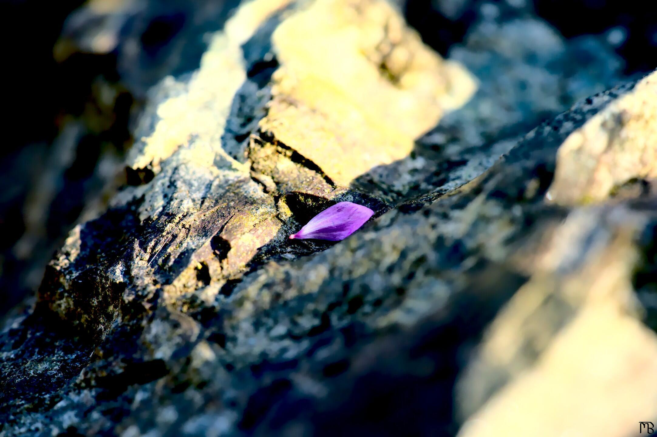 Arty pink petal on rock