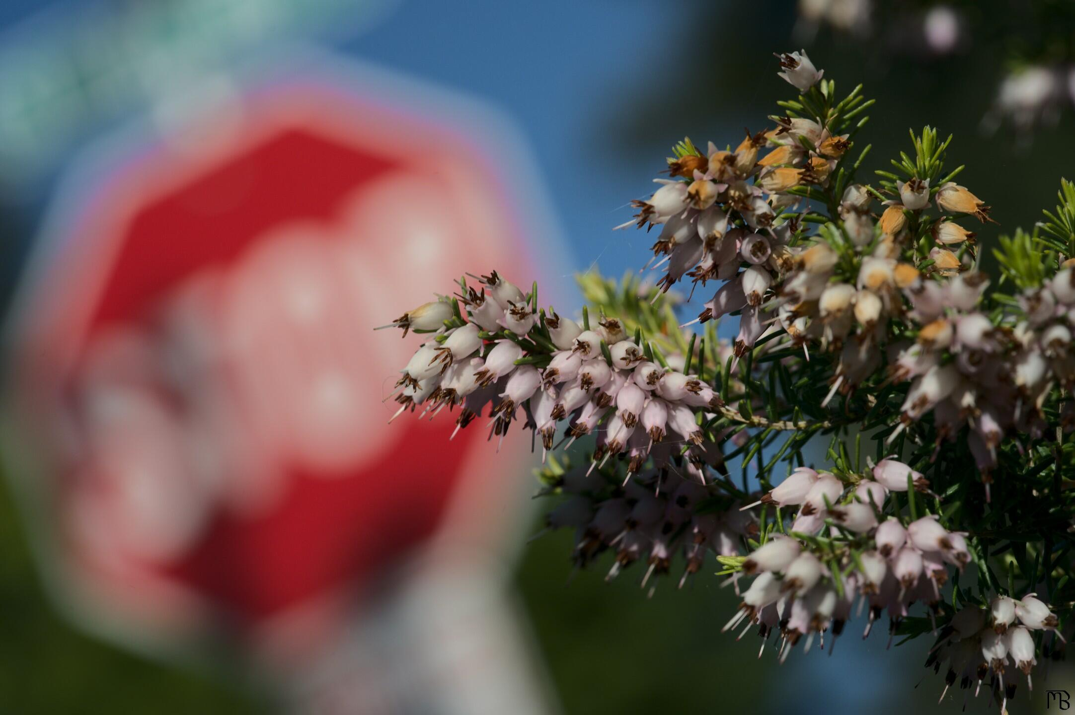 Pink flowers with stop sign backdrop