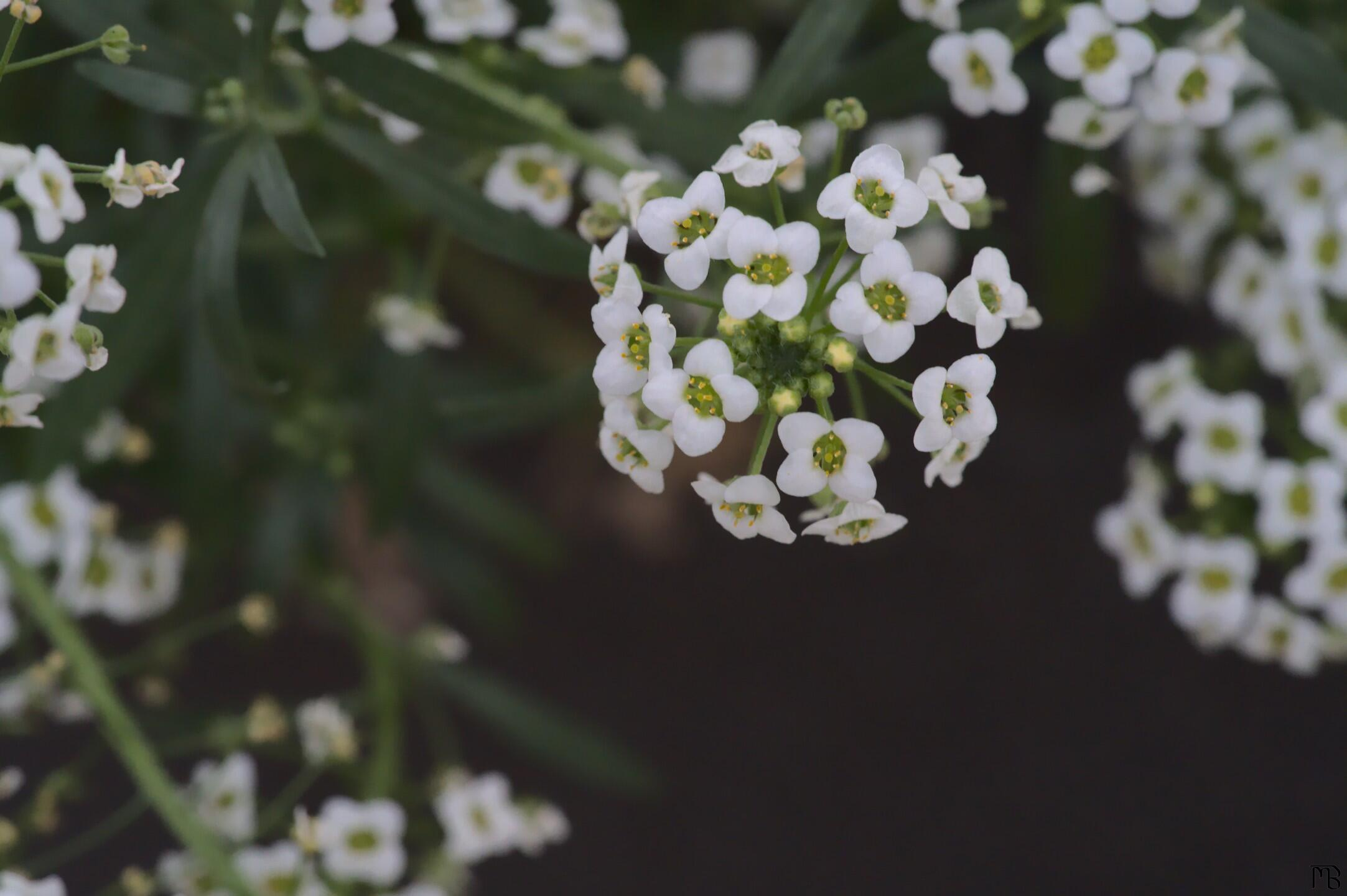 White flowers in a ball